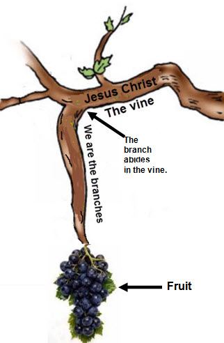 Assurance through the vine bearing fruit.