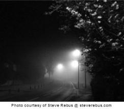 steve fog