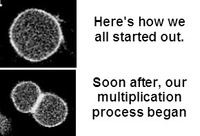 cell multiplication