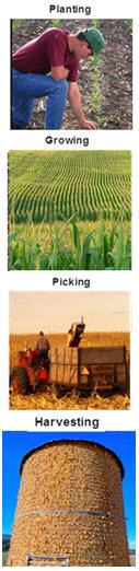planting growing picking harvesting3.doc